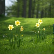 Spring time checks.